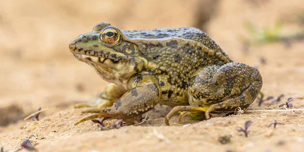 Uitstelgedrag afleren en Eat that frog